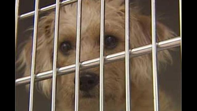 Animal Shelter Remains Overcrowded, Euthanasia Numbers Rise