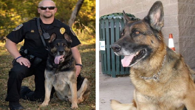 Two Abilene Police K9s Euthanized on Same Day