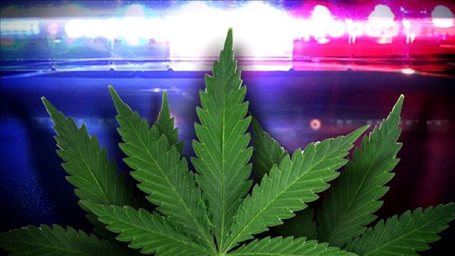 $600,000 Pot Bust Lands One Man in Jail in North Texas