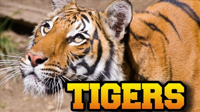 Police says tiger who killed zookeeper is unharmed