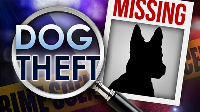 Abilene Police Investigating Multiple Reports of Dog Theft