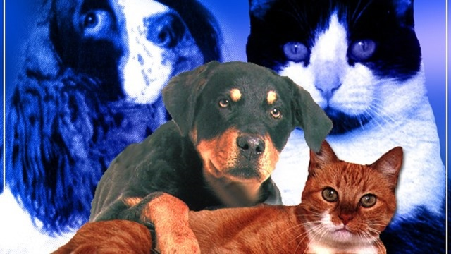 Abilene Animal Shelter and Rescue the Animals, SPCA Teaming Up for June Sale