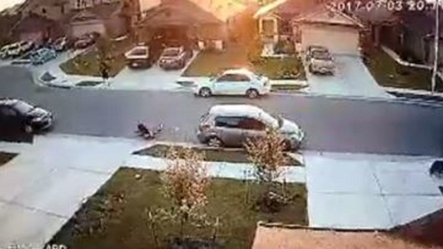 GRAPHIC VIDEO: Dog put down after attacking 7-year-old Texas boy