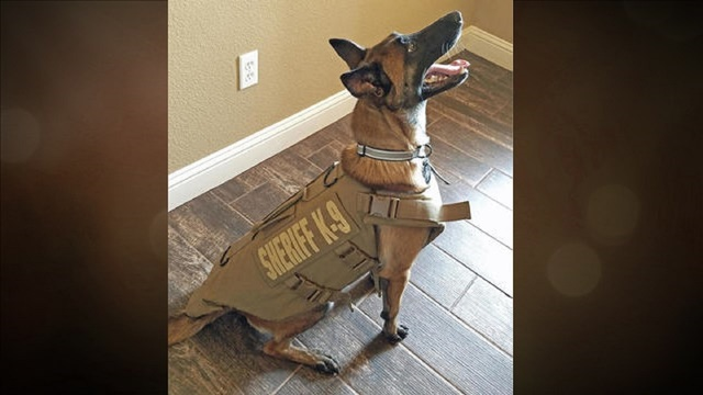 Tom Green County Sheriff's K9 receives armor