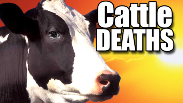 $20,000 worth of cattle shot, killed in New Mexico