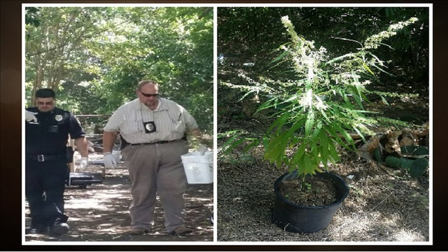 3 arrested after Coleman PD finds marijuana in backyard