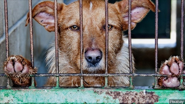 City of Comanche needs to rehome nearly 30 animals due to temporary shelter closure