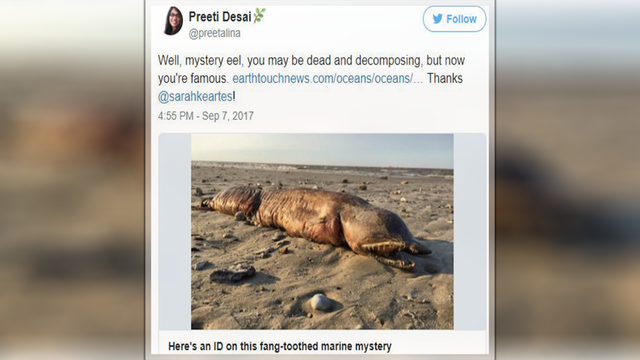 Mysterious sea creature washes up in Texas after Hurricane Harvey