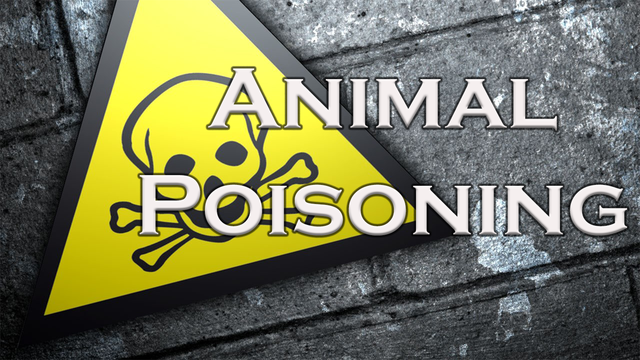 Baird City Marshal investigating animal poisoning claims, no official reports filed