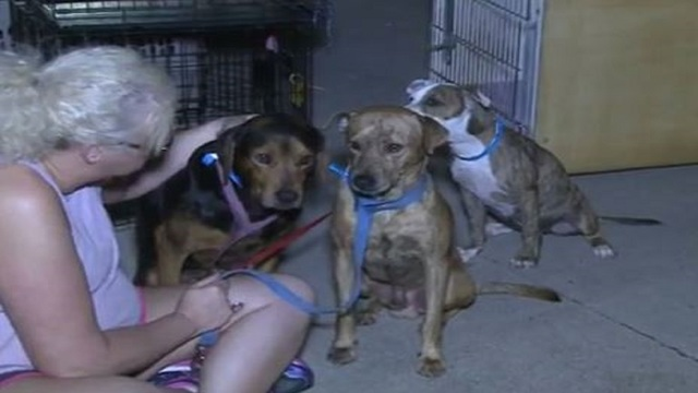 Rescue the Animals Abilene cuts ties with transport group after dogs travel in 120 degree heat