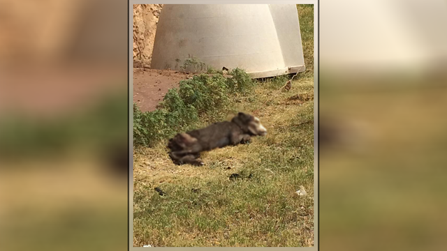 Police launch animal cruelty investigation after dead dog found in Abilene yard