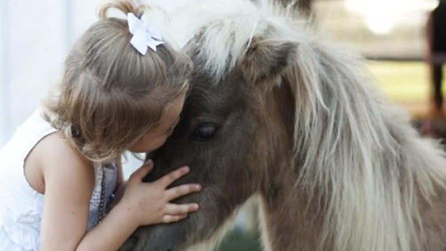 Texas family's beloved dwarf pony 'Chicken Nugget' shot and killed