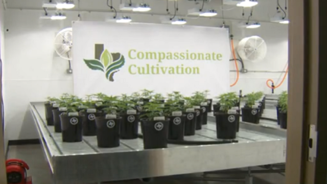 Texas medical cannabis company names grow room after state lawmaker
