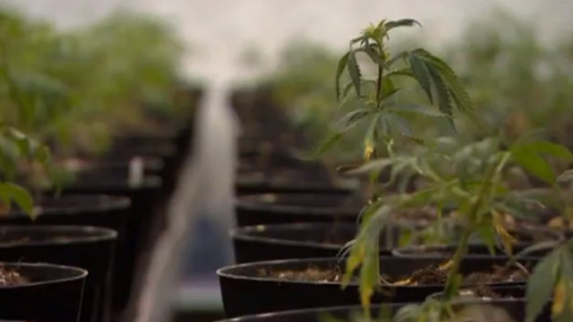 Lawmakers renew push to legalize marijuana in New Mexico