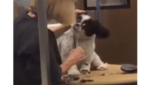 Texas PetSmart groomer fired after aggressive handling caught on camera