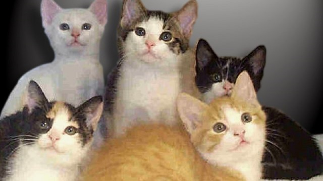 Cats Free, Dogs $40 during 'Home for the Holidays' sale at Abilene Animal Shelter