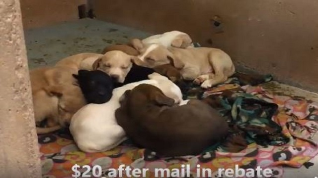 Puppies only $20 during 'Emergency Sale' at Abilene Animal Shelter