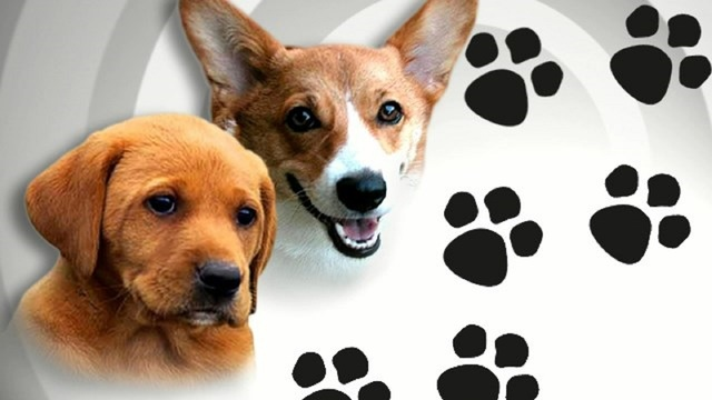 puppies free at abilene animal shelter after mail in rebate