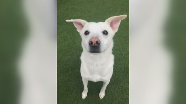Couple heartbroken after their dog wrongly euthanized